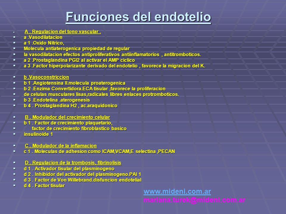 Funciones del endotelio