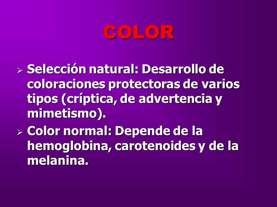 COLOR Selección natural: Desarrollo de coloraciones protectoras de varios tipos (críptica, de advertencia y mimetismo).