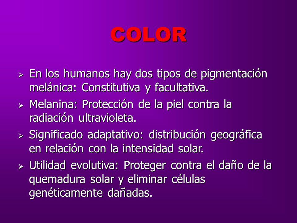 COLOR En los humanos hay dos tipos de pigmentación melánica: Constitutiva y facultativa.