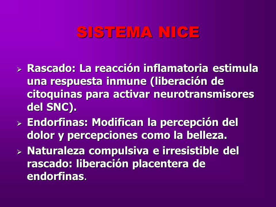 SISTEMA NICE Rascado: La reacción inflamatoria estimula una respuesta inmune (liberación de citoquinas para activar neurotransmisores del SNC).