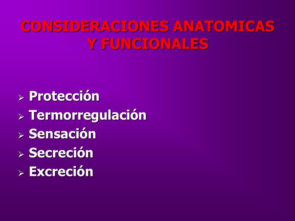 CONSIDERACIONES ANATOMICAS Y FUNCIONALES