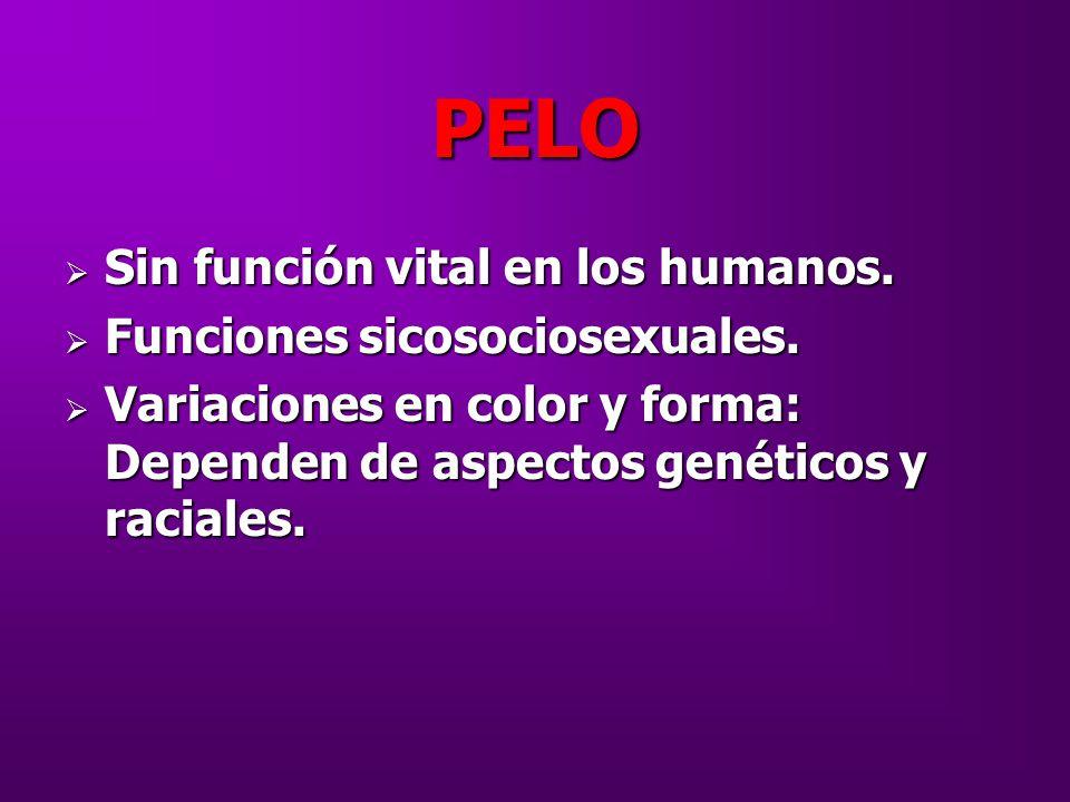 PELO Sin función vital en los humanos. Funciones sicosociosexuales.