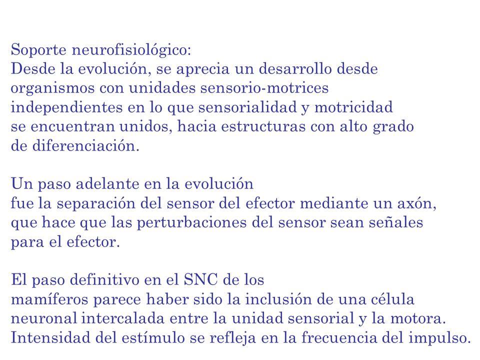 Soporte neurofisiológico: