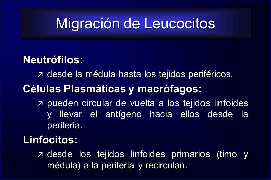 Migración de Leucocitos