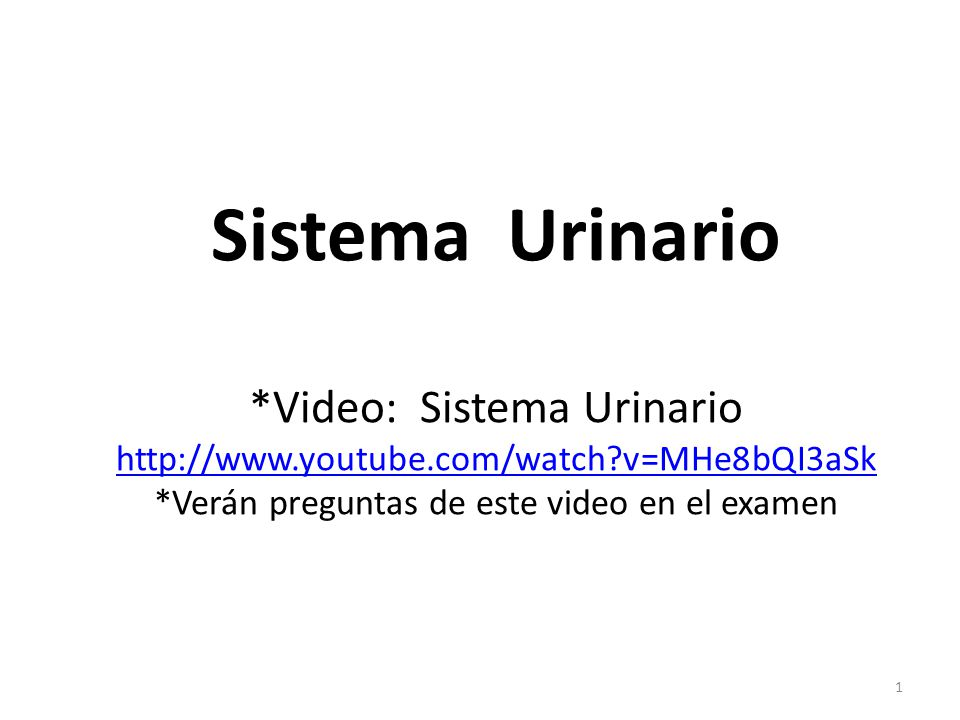 Sistema Urinario. Video: Sistema Urinario http://www. youtube