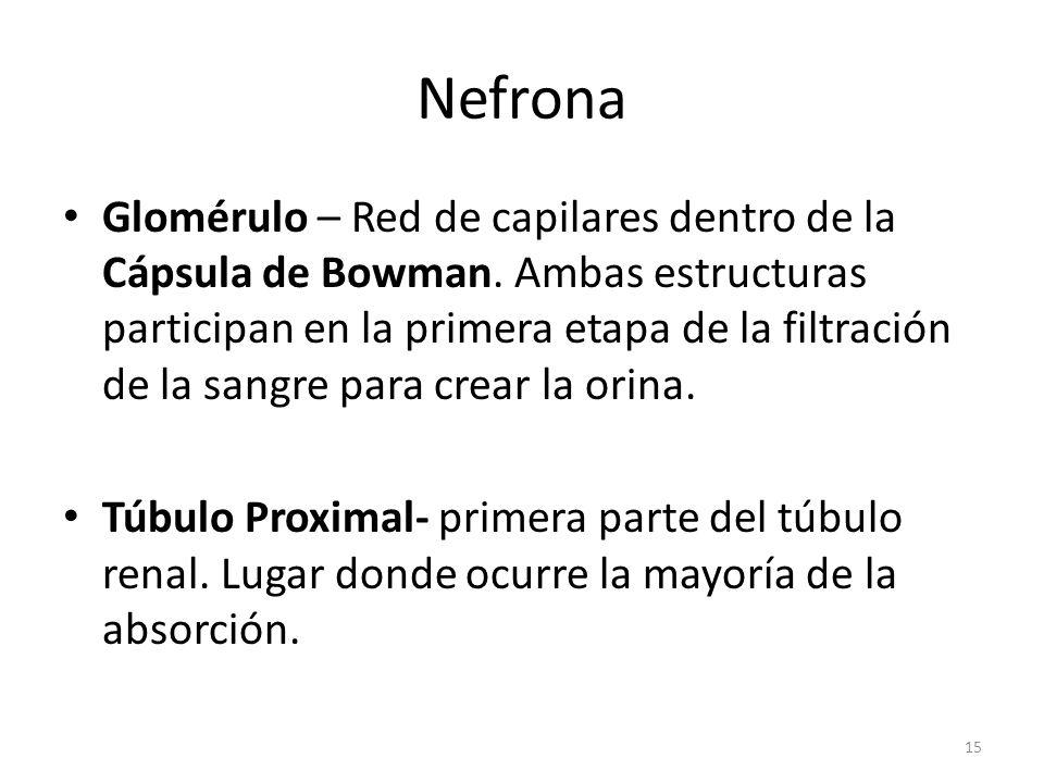Nefrona