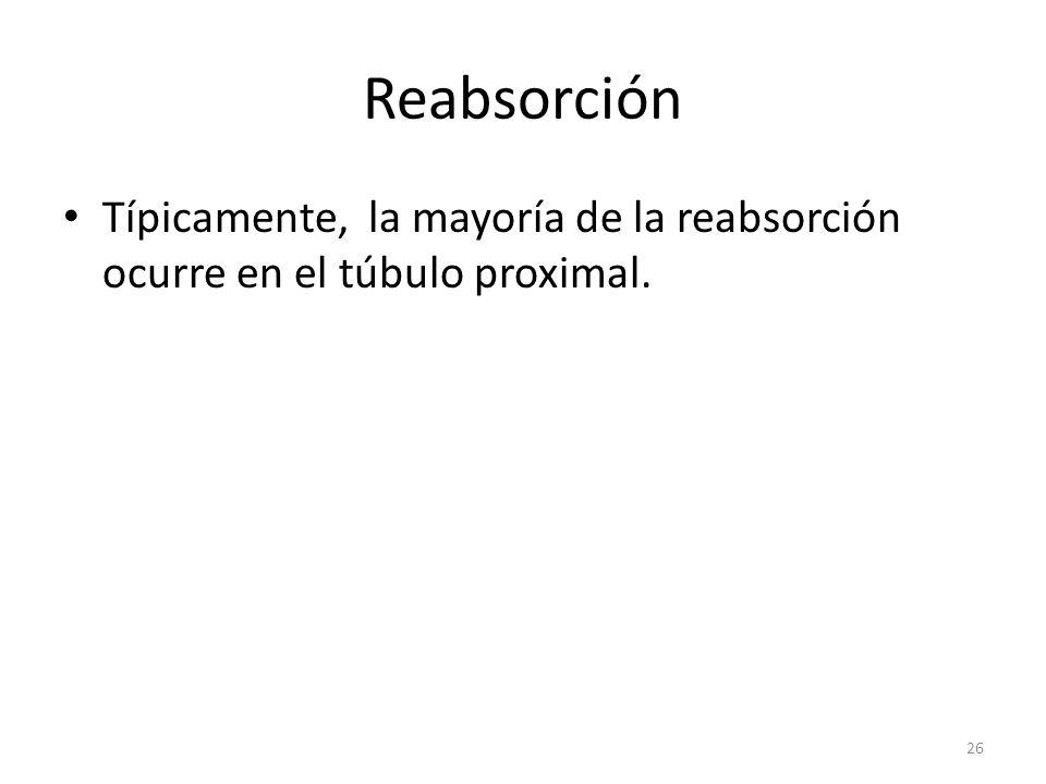 Reabsorción Típicamente, la mayoría de la reabsorción ocurre en el túbulo proximal.
