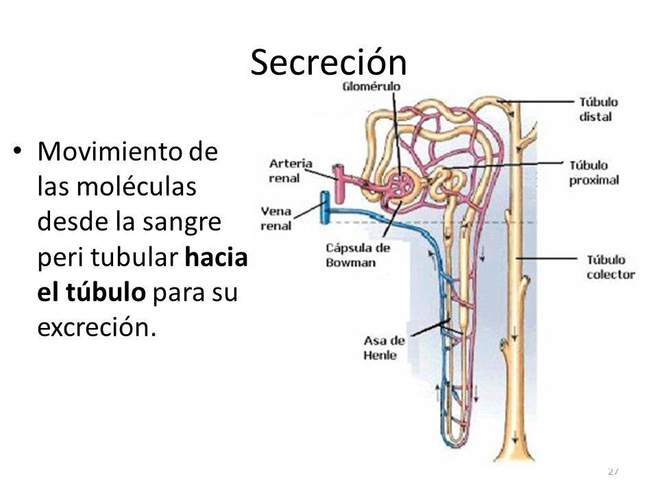 Secreción Movimiento de las moléculas desde la sangre peri tubular hacia el túbulo para su excreción.