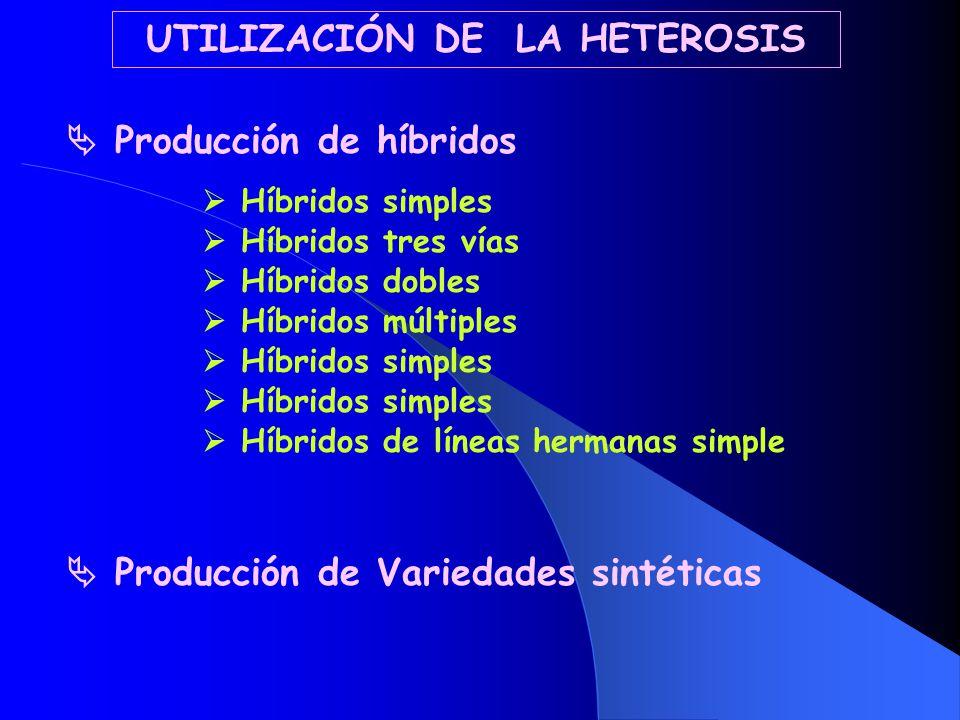 UTILIZACIÓN DE LA HETEROSIS