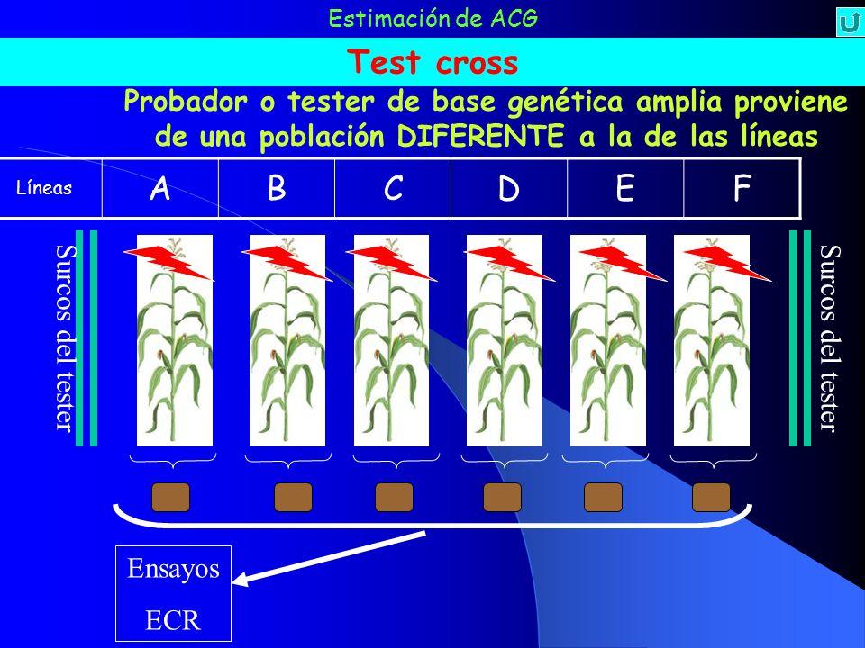 Estimación de ACG Test cross. Probador o tester de base genética amplia proviene de una población DIFERENTE a la de las líneas.