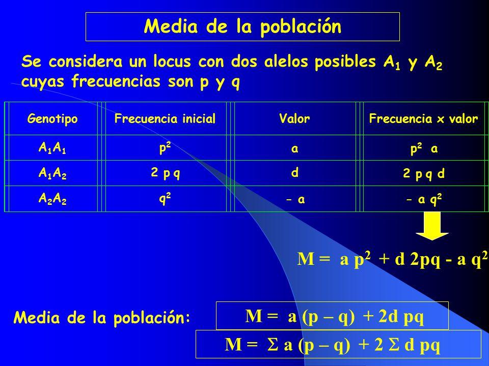 Media de la población M = a p2 + d 2pq - a q2 M = a (p – q) + 2d pq
