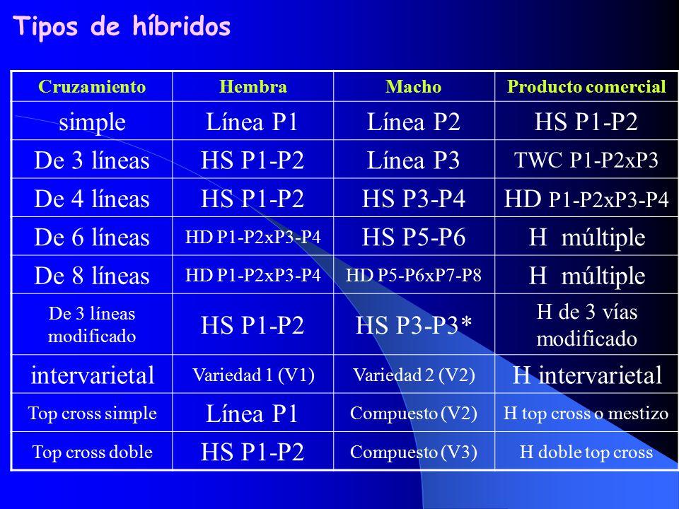 Tipos de híbridos simple Línea P1 Línea P2 HS P1-P2 De 3 líneas