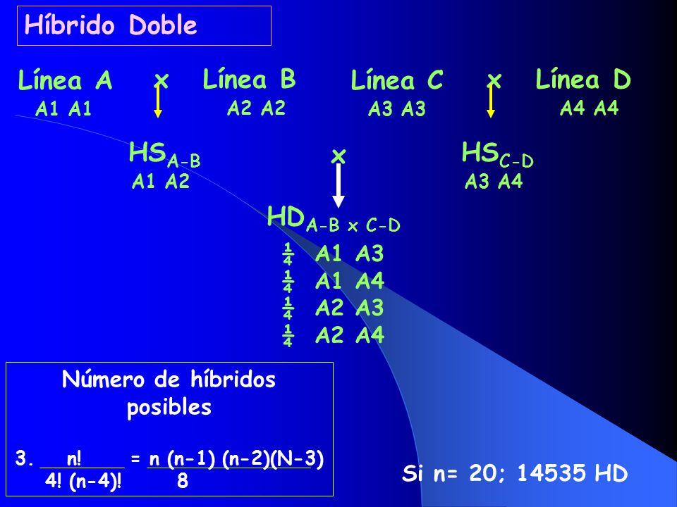 Híbrido Doble Línea A x Línea B HSA-B Línea C x Línea D HSC-D x