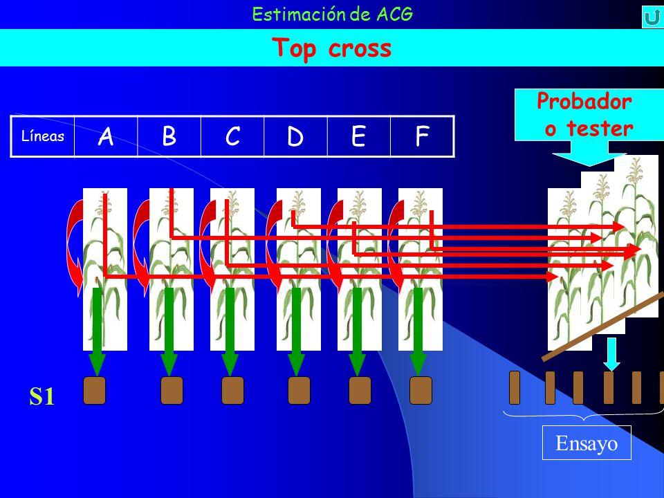 Top cross A B C D E F S1 Probador o tester Ensayo Estimación de ACG