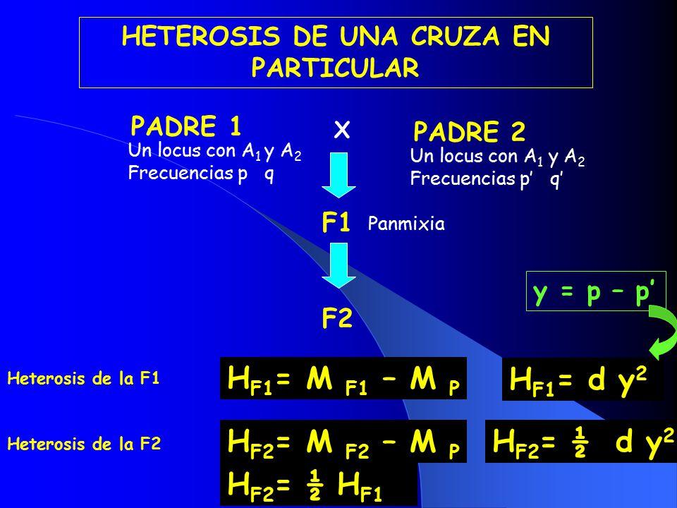 HETEROSIS DE UNA CRUZA EN PARTICULAR