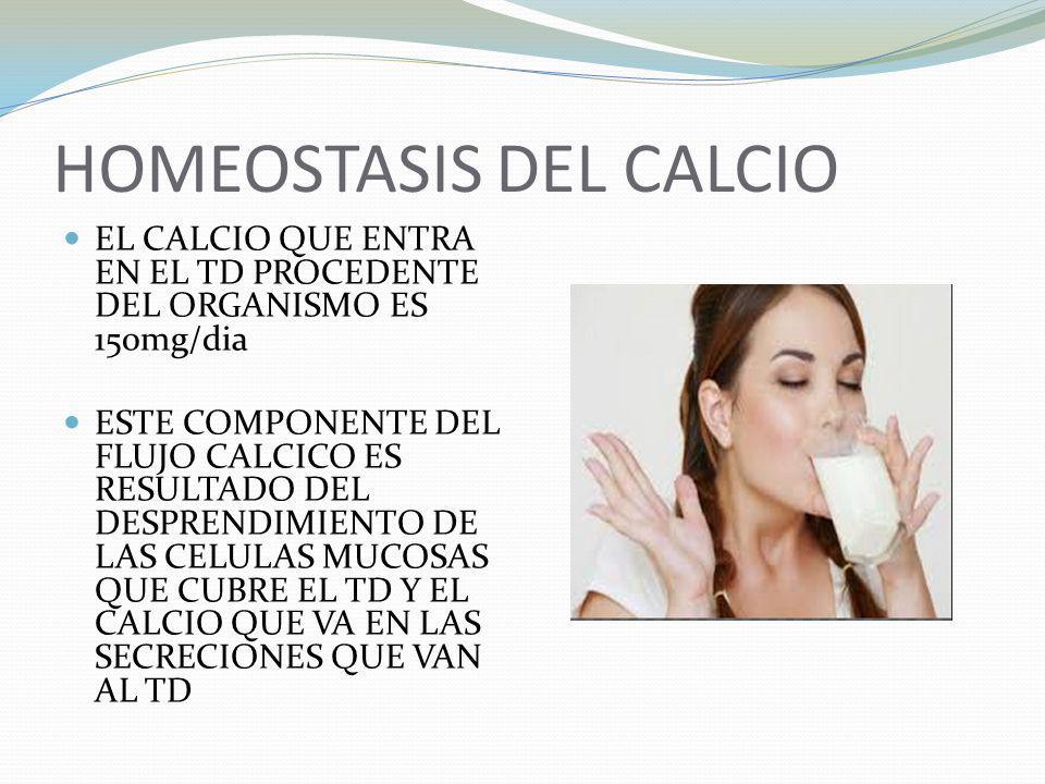 HOMEOSTASIS DEL CALCIO