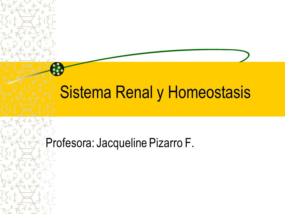 Sistema Renal y Homeostasis