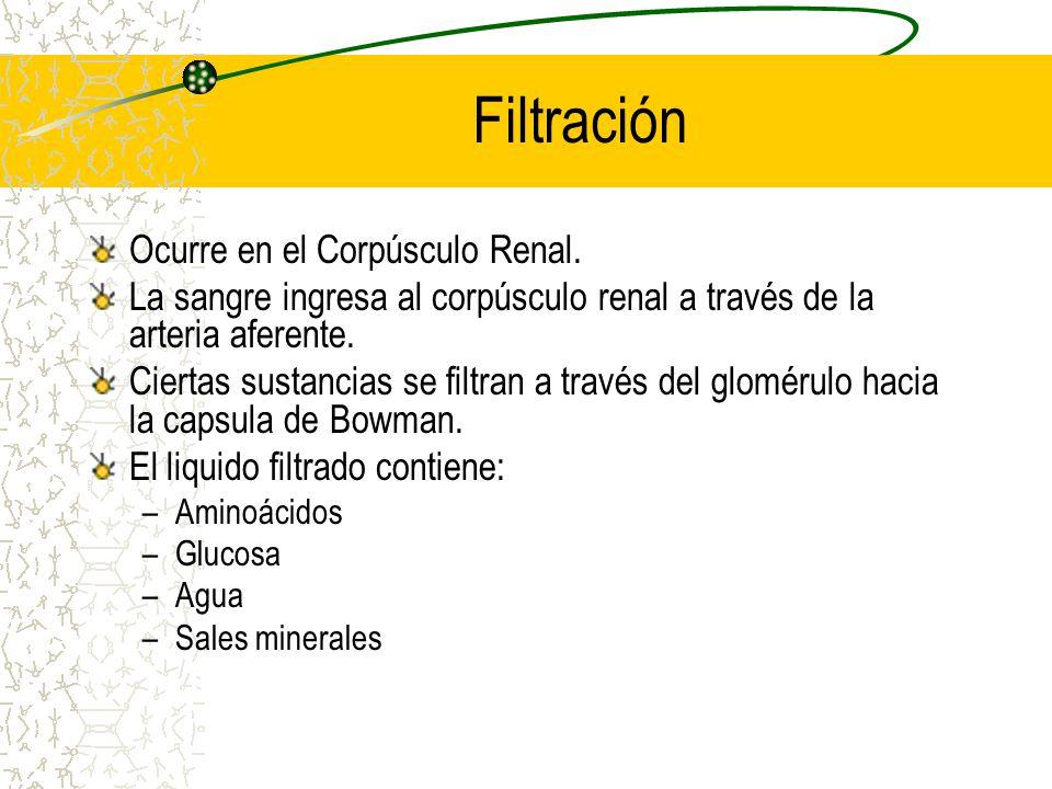 Filtración Ocurre en el Corpúsculo Renal.