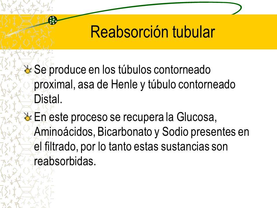 Reabsorción tubular Se produce en los túbulos contorneado proximal, asa de Henle y túbulo contorneado Distal.