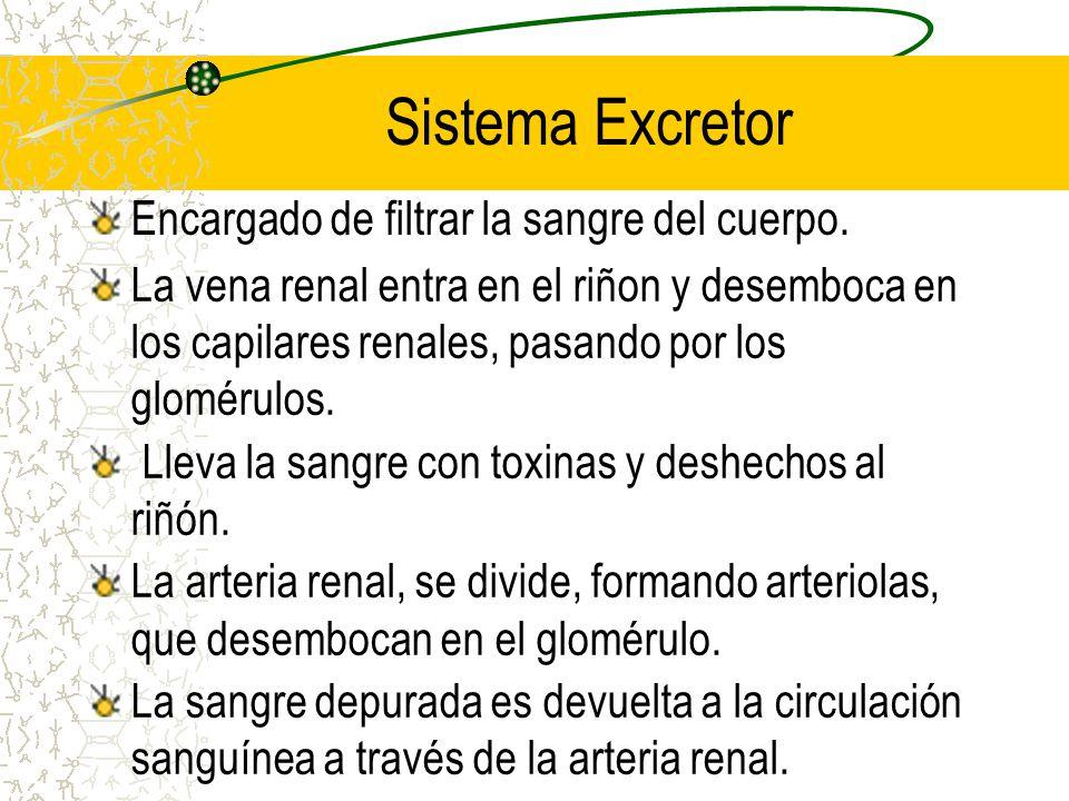 Sistema Excretor Encargado de filtrar la sangre del cuerpo.