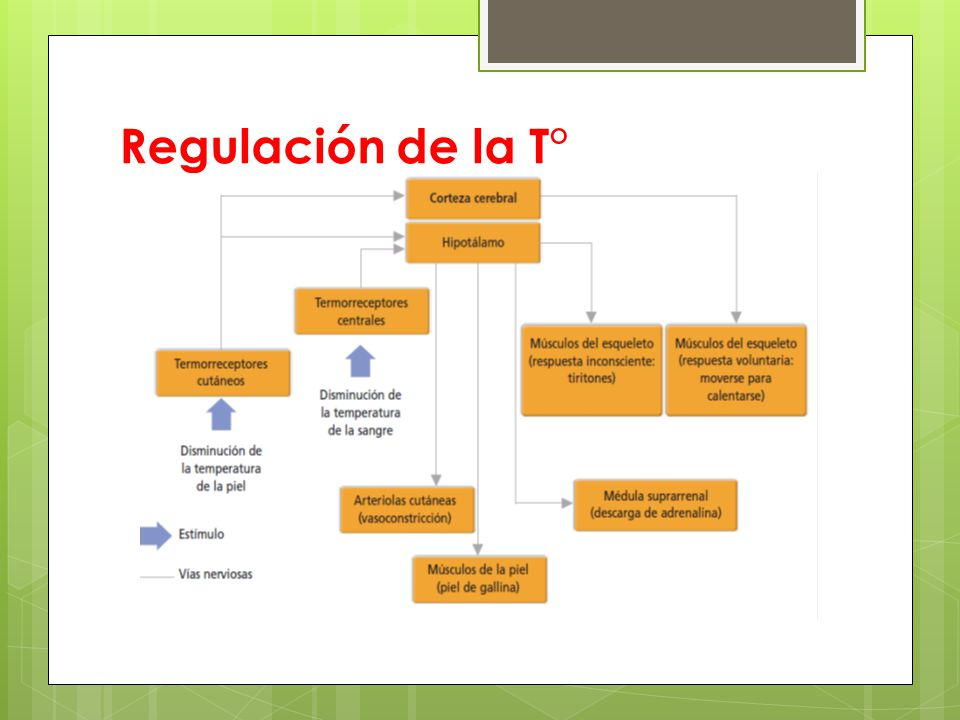 Regulación de la T°