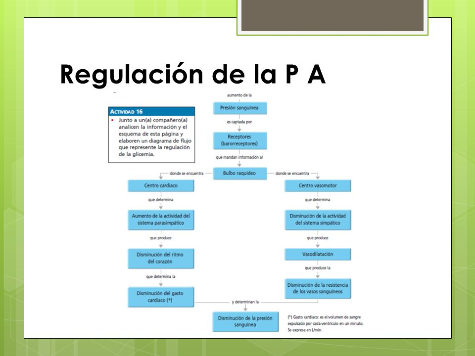 Regulación de la P A