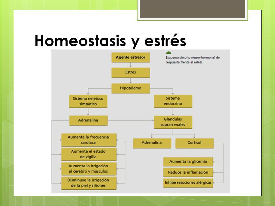 Homeostasis y estrés