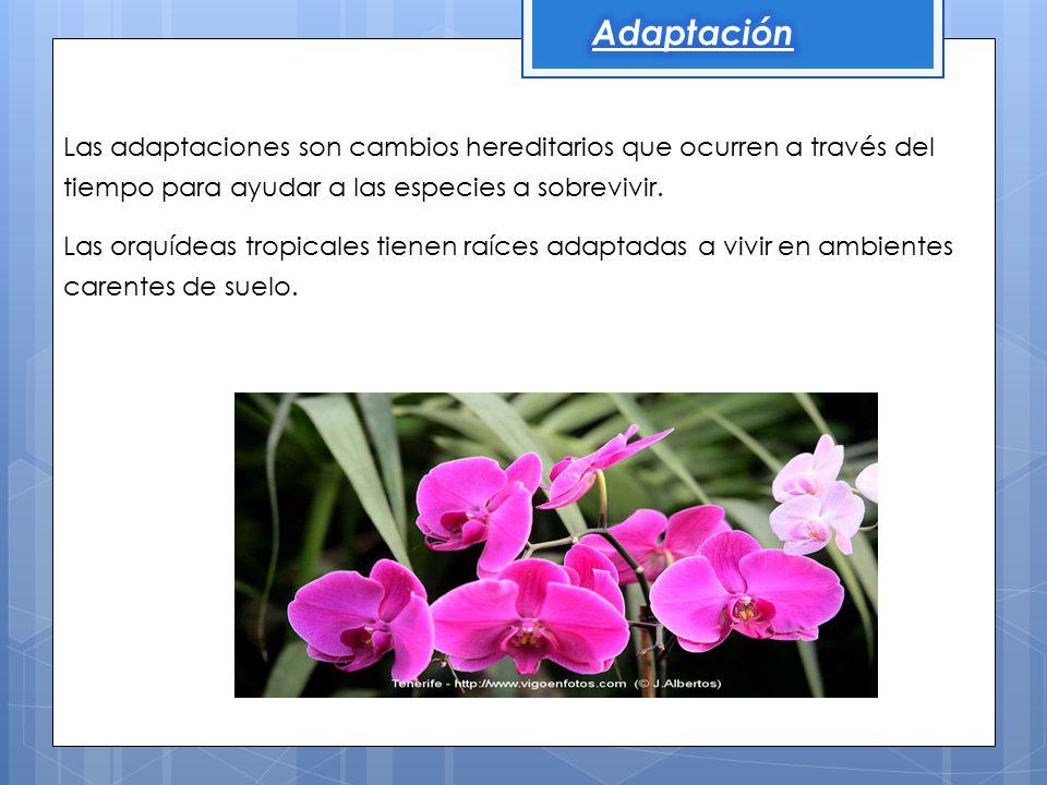 Adaptación Las adaptaciones son cambios hereditarios que ocurren a través del tiempo para ayudar a las especies a sobrevivir.