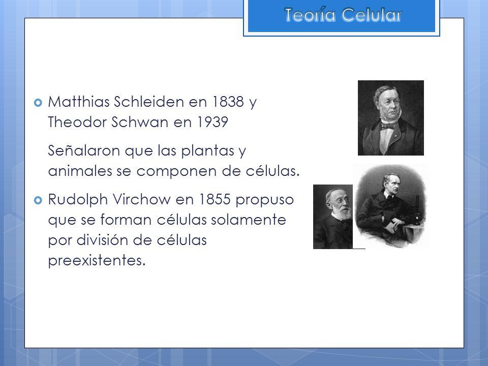 Teoría Celular Matthias Schleiden en 1838 y Theodor Schwan en 1939