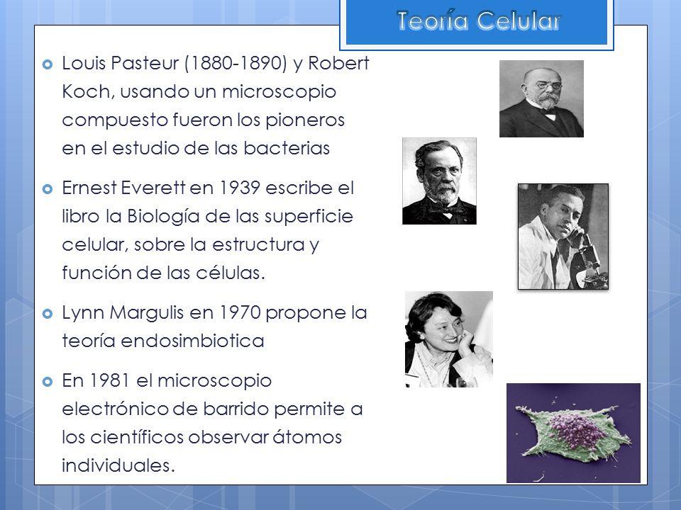 Teoría Celular Louis Pasteur (1880-1890) y Robert Koch, usando un microscopio compuesto fueron los pioneros en el estudio de las bacterias.