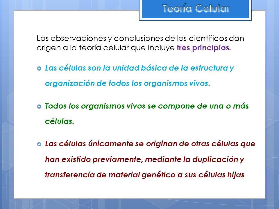 Teoría Celular Las observaciones y conclusiones de los científicos dan origen a la teoría celular que incluye tres principios.