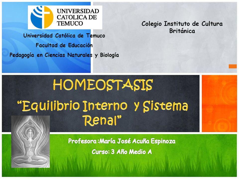 HOMEOSTASIS Equilibrio Interno y Sistema Renal