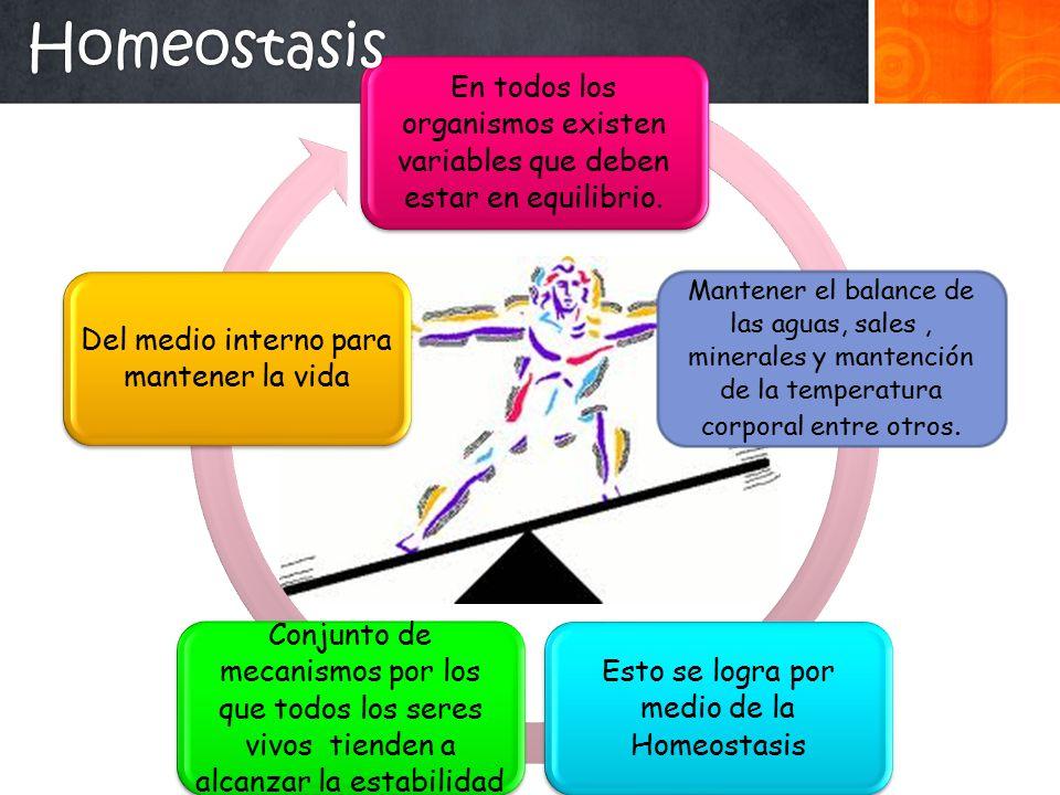 Homeostasis En todos los organismos existen variables que deben estar en equilibrio.