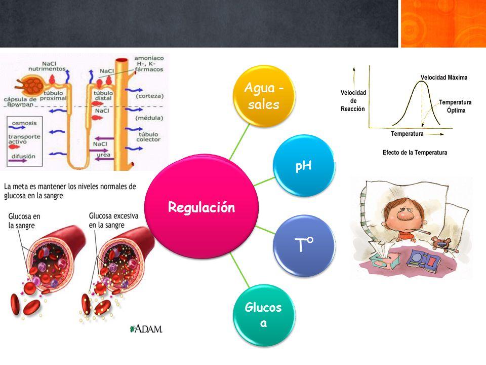 Agua -sales pH T° Glucosa Regulación