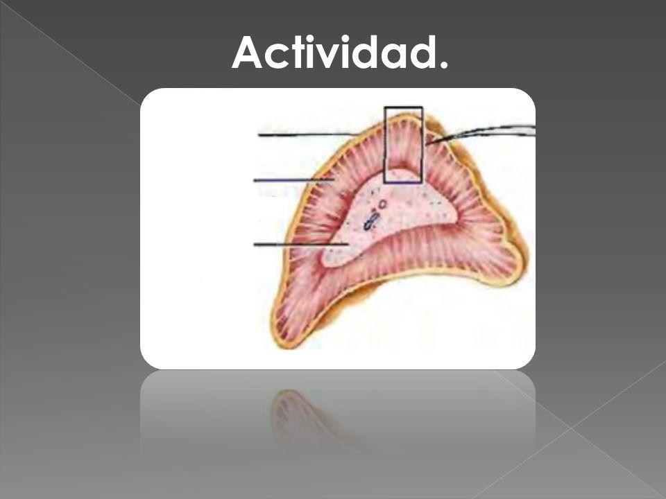 Actividad.