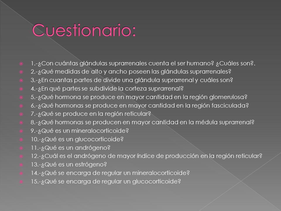 Cuestionario: 1.-¿Con cuántas glándulas suprarrenales cuenta el ser humano ¿Cuáles son .