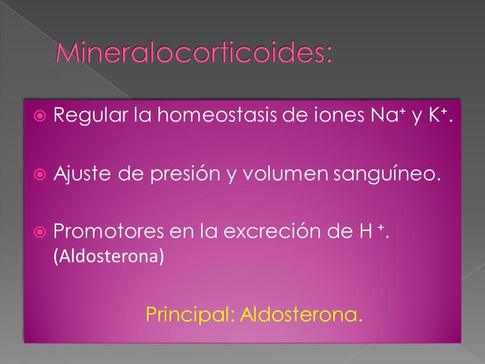 Mineralocorticoides: