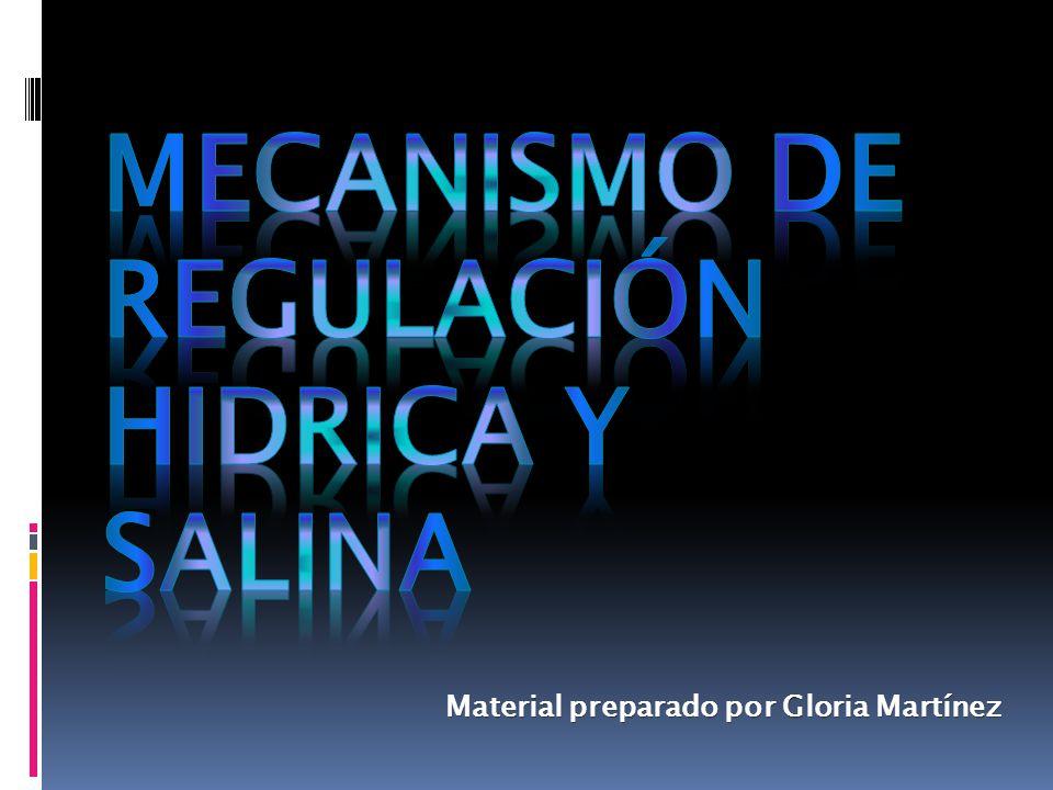 MECANISMO DE REGULACIÓN HIDRICA Y SALINA