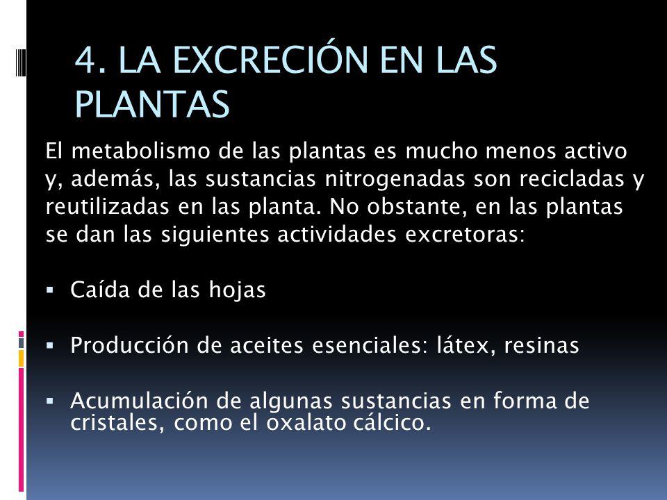 4. LA EXCRECIÓN EN LAS PLANTAS