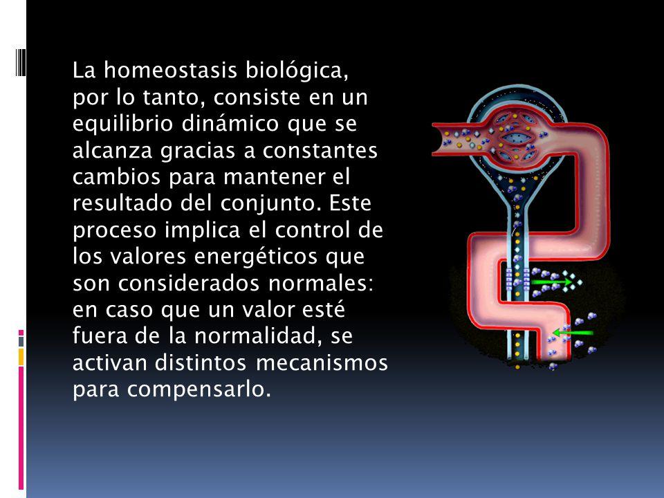 La homeostasis biológica, por lo tanto, consiste en un equilibrio dinámico que se alcanza gracias a constantes cambios para mantener el resultado del conjunto.