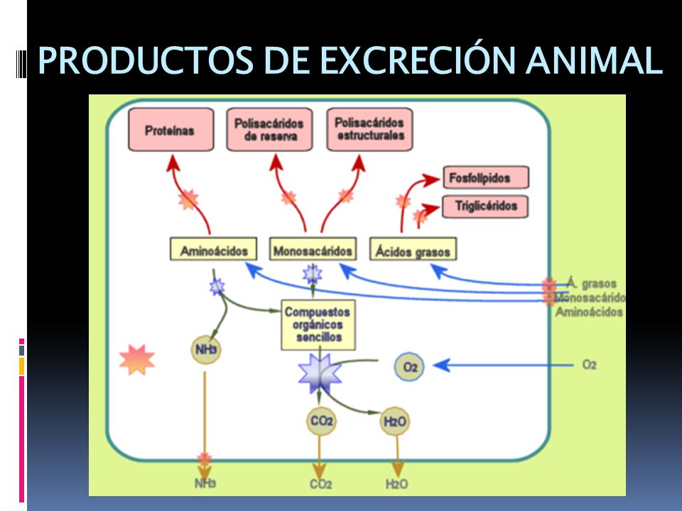 PRODUCTOS DE EXCRECIÓN ANIMAL