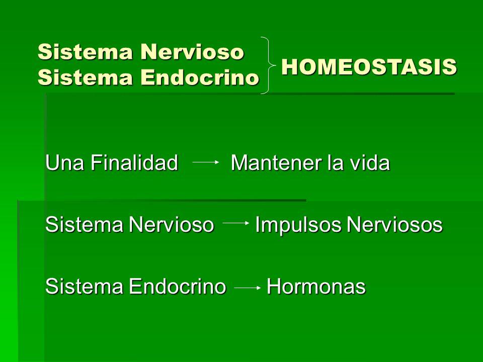 Sistema Nervioso Sistema Endocrino
