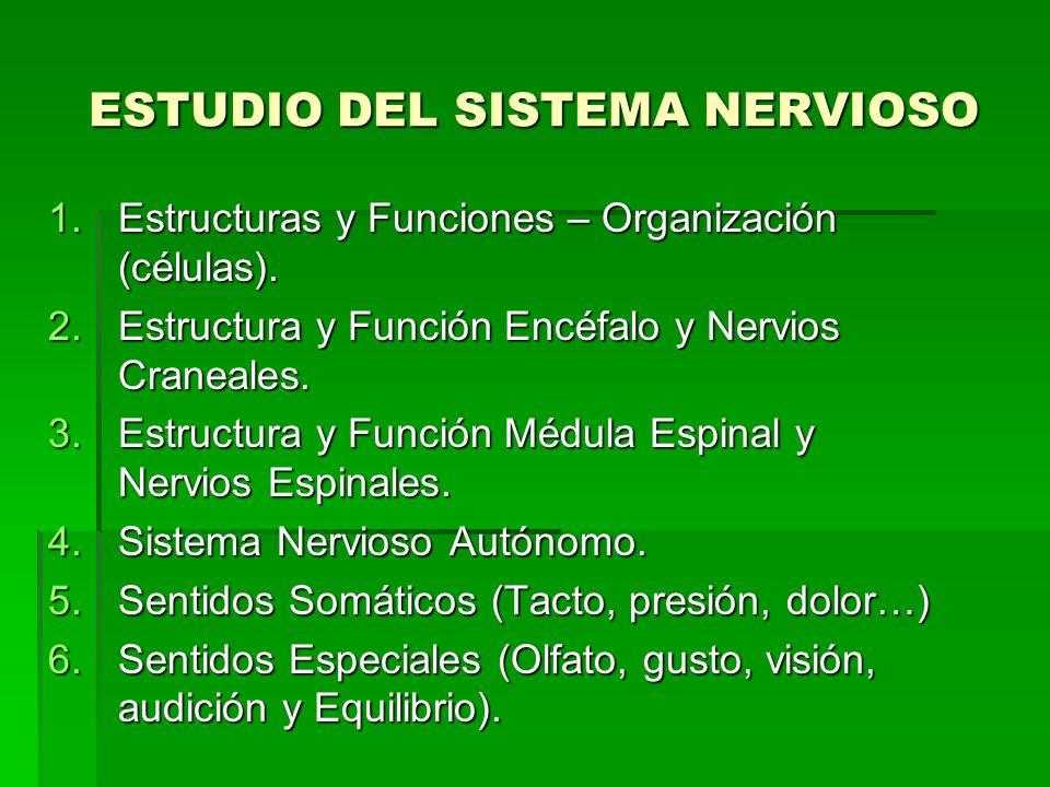ESTUDIO DEL SISTEMA NERVIOSO