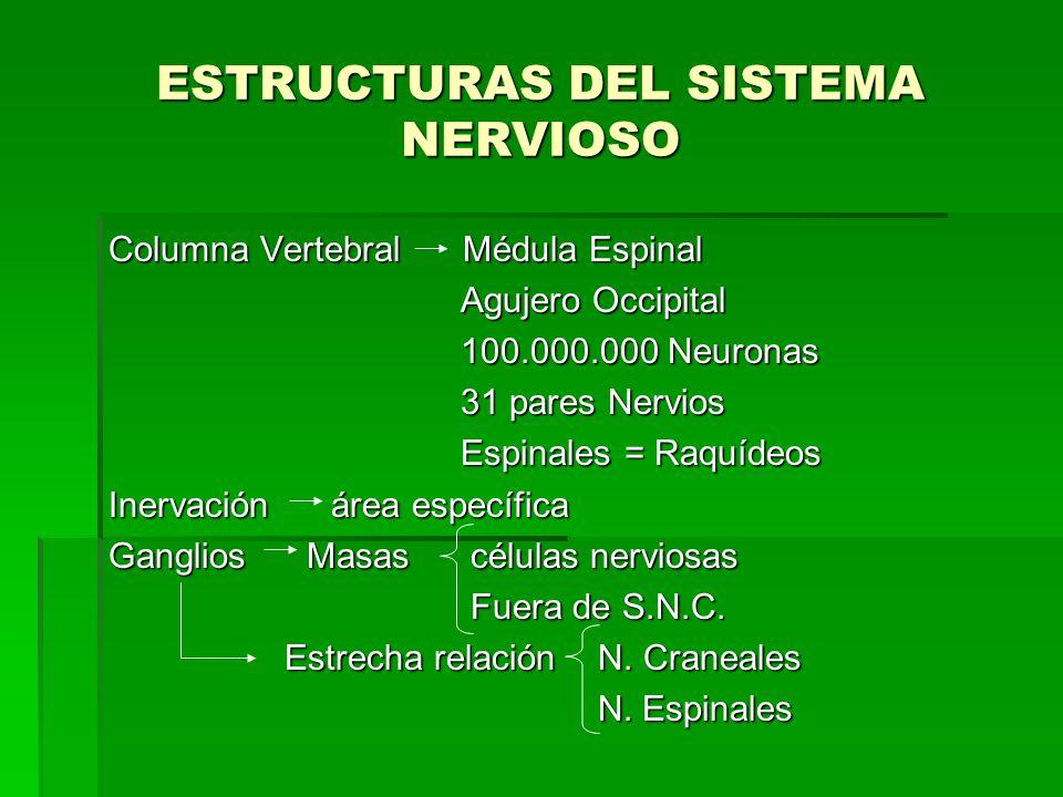 ESTRUCTURAS DEL SISTEMA NERVIOSO