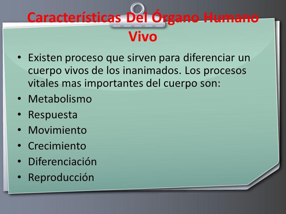 Características Del Órgano Humano Vivo