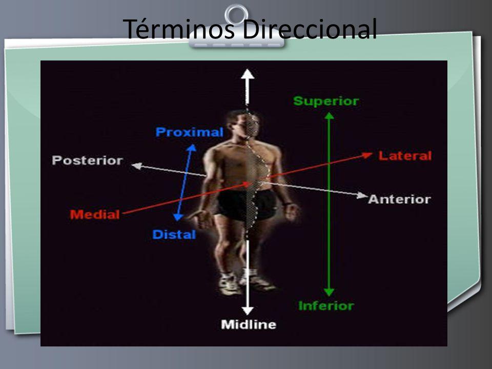 Excelente Anatomía Y Fisiología Hoja Términos Direccionales Bandera ...