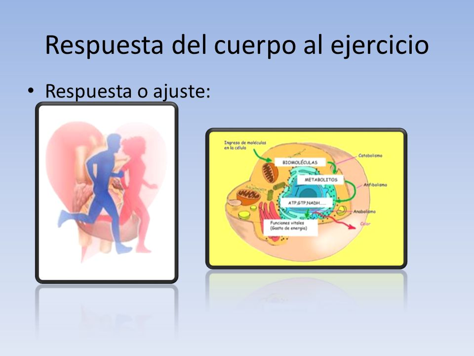 Respuesta del cuerpo al ejercicio