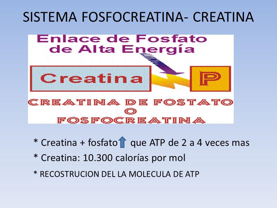 SISTEMA FOSFOCREATINA- CREATINA