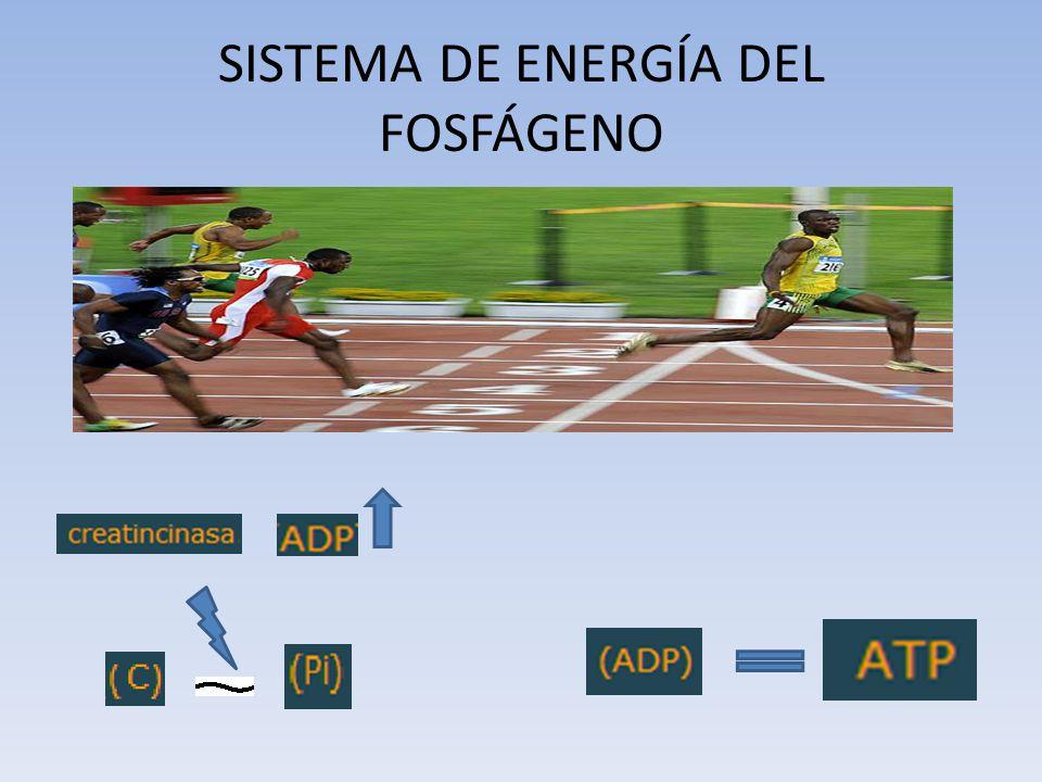SISTEMA DE ENERGÍA DEL FOSFÁGENO