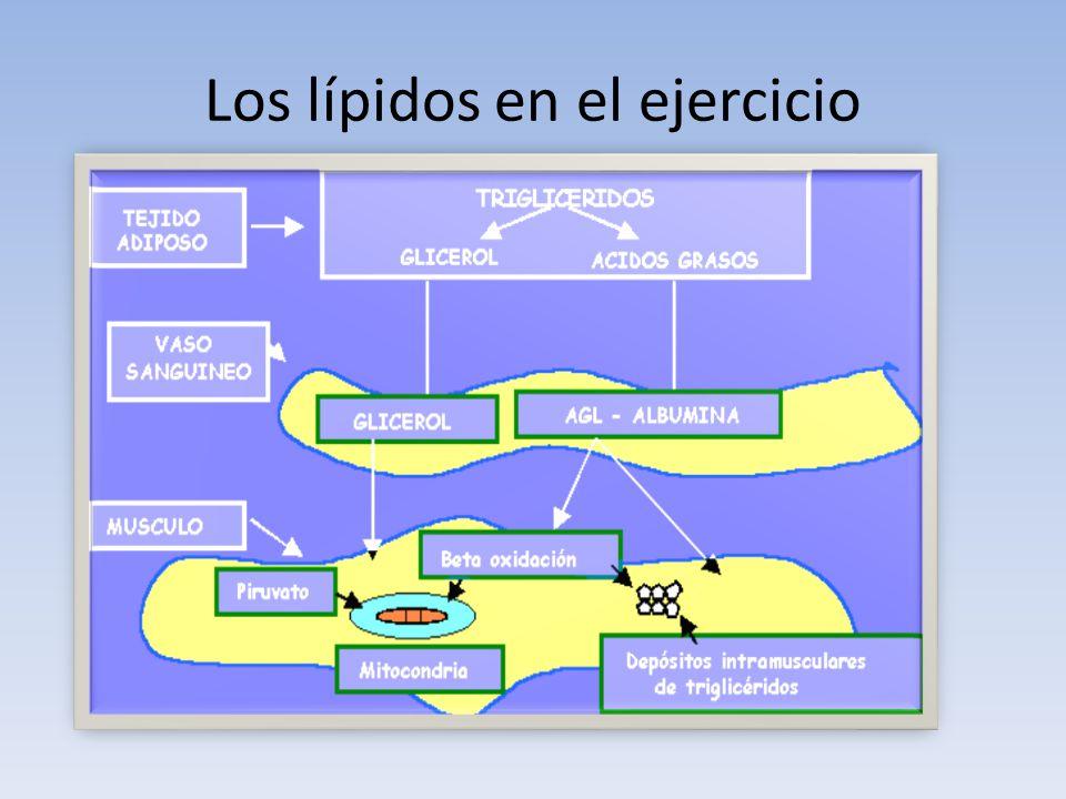 Los lípidos en el ejercicio